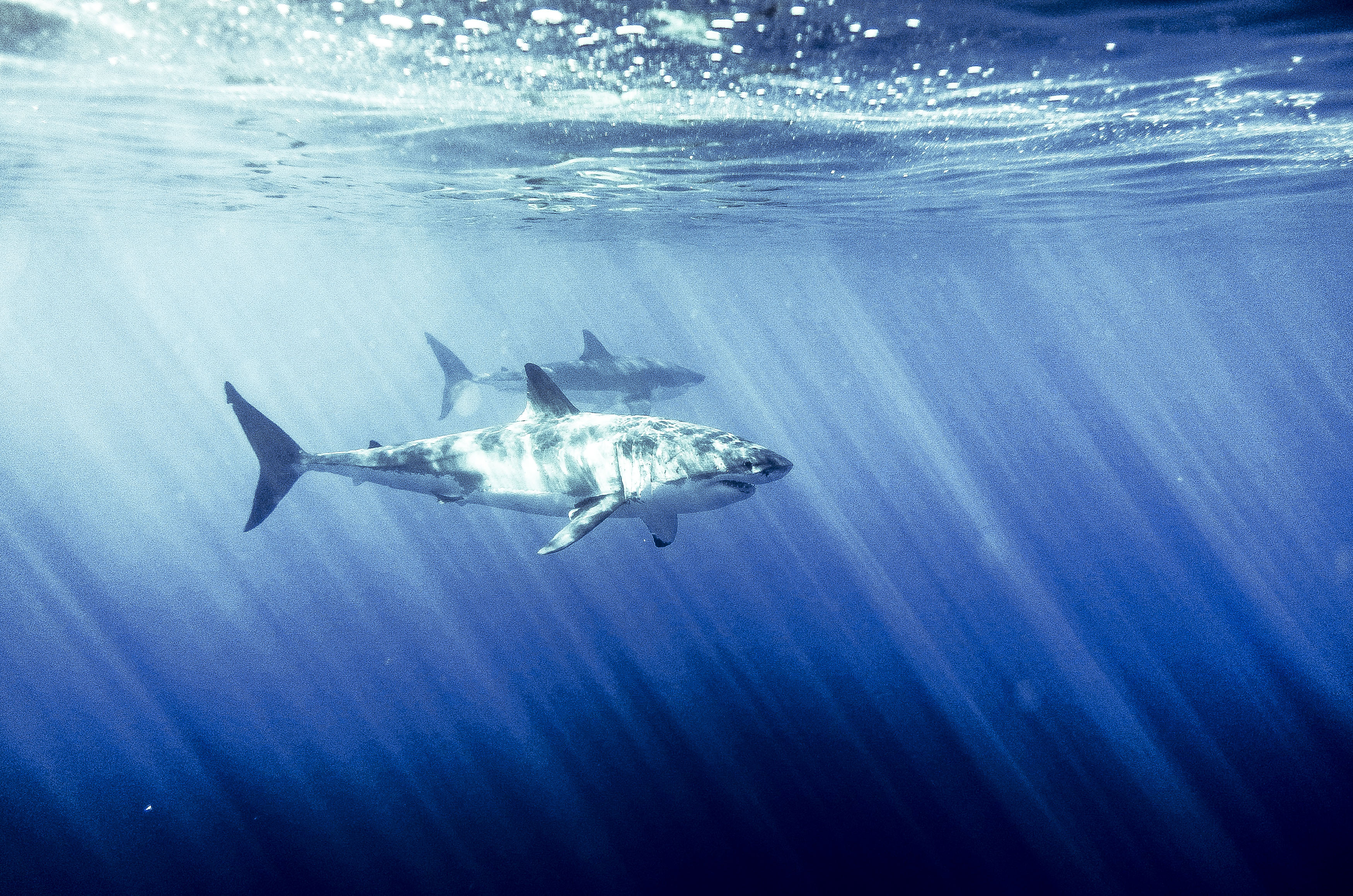 IWC_Aquatimer_Shark_10