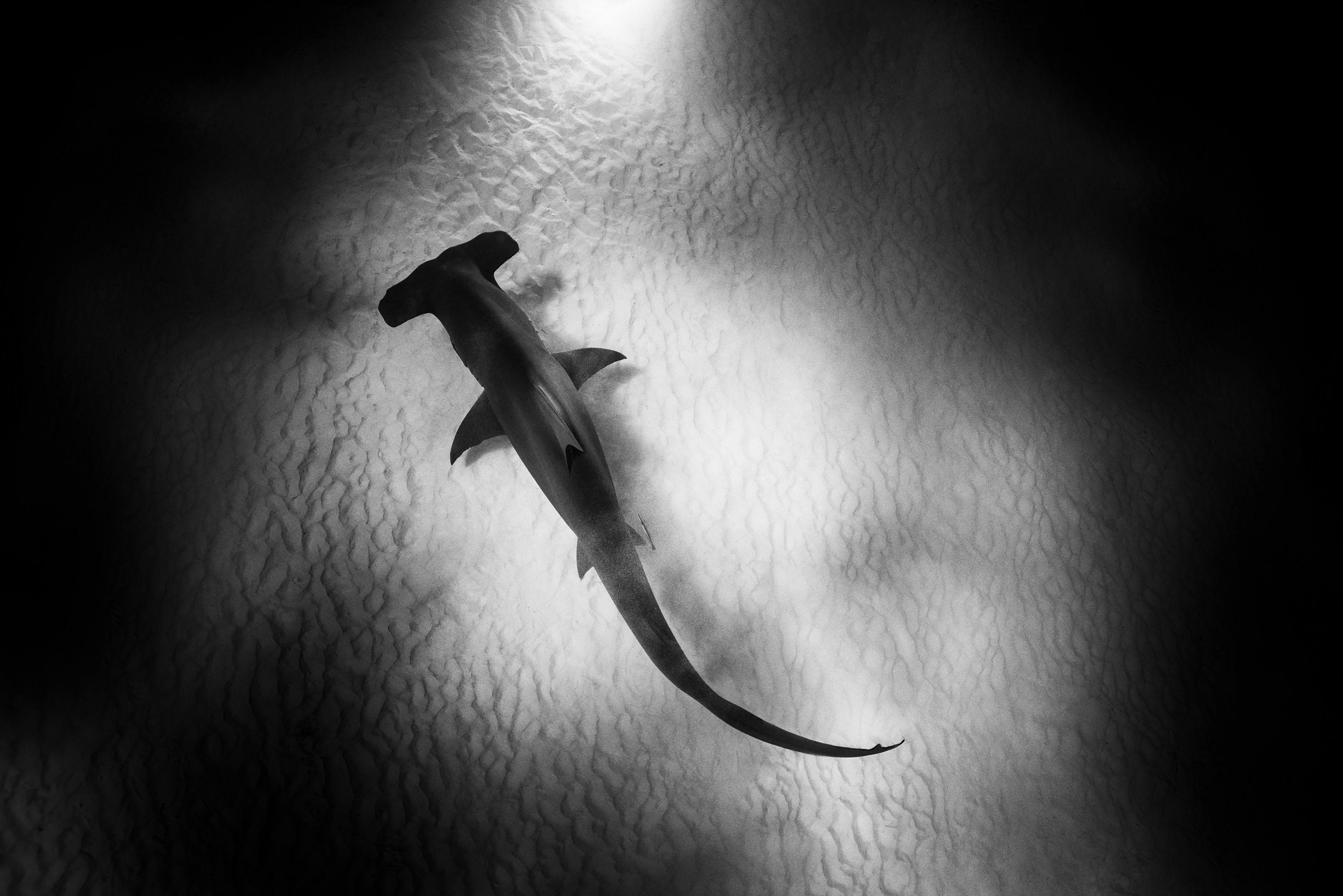 IWC_Aquatimer_Shark_2