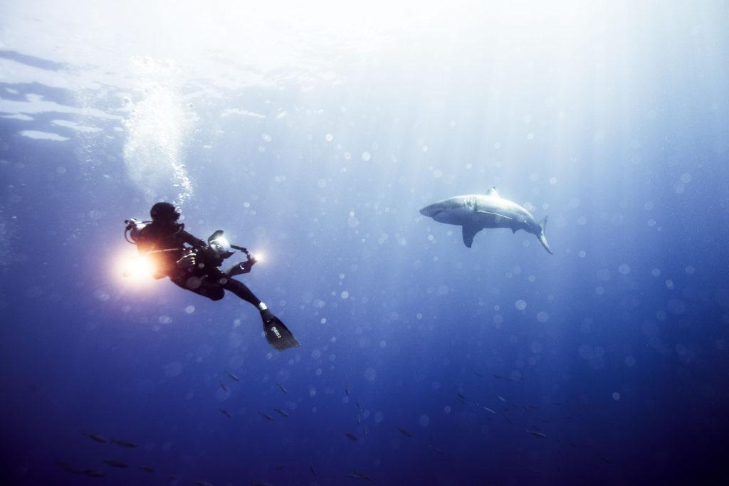 IWC_Aquatimer_Shark_7